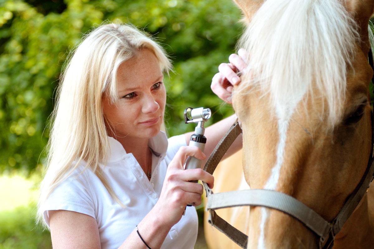 Pferde Behandlung